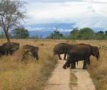 Elephant-safari-Sri-Lanka