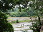 Le Sri Lanka hors des sentiers battus