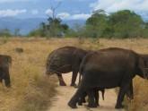 Elephants au parc national de Yala - Sri Lanka