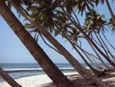 Bentota-plage-Sri-Lanka