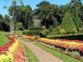 Perradeniya-jardin-botanique