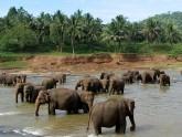 Pinnawela-elephant-orphelinat