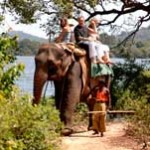 Balade à dos d'éléphant au Sri Lanka