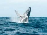 Excursion voir les baleines à Mirissa