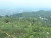 plantation de thé nuwara eliya