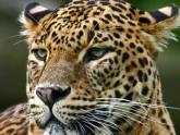 Leopard Parc de Wilpattu - Sri Lanka