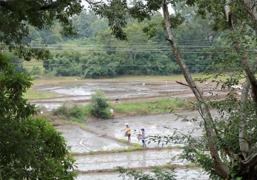 Agriculteurs sri lankais