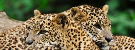 Partez en safari au Sri Lanka