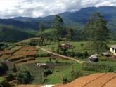 Les vallées de thé au Sri Lanka