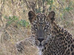 safari en sri lanka