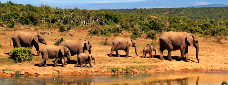 Animaux Sri Lanka